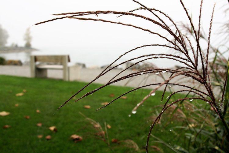 grass-2858956_960_720